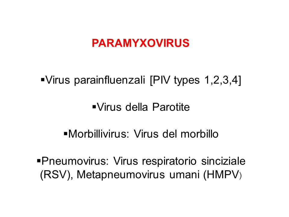 Virus parainfluenzali [PIV types 1,2,3,4] Virus della Parotite